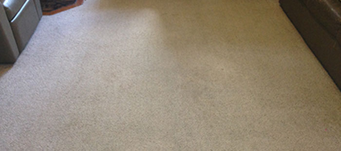 Commercial & Domestic Carpet Cleaning After